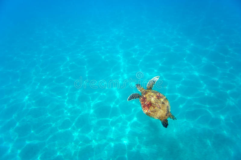 Aqua turtle stock photos
