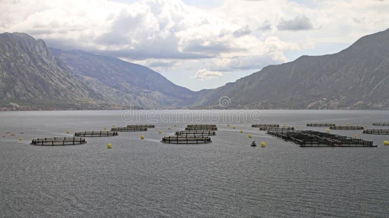 Aquaculture Aqua Uprawia ziemię sieci fotografia royalty free