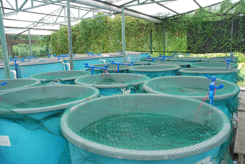 Aquaculture farm royalty free stock images