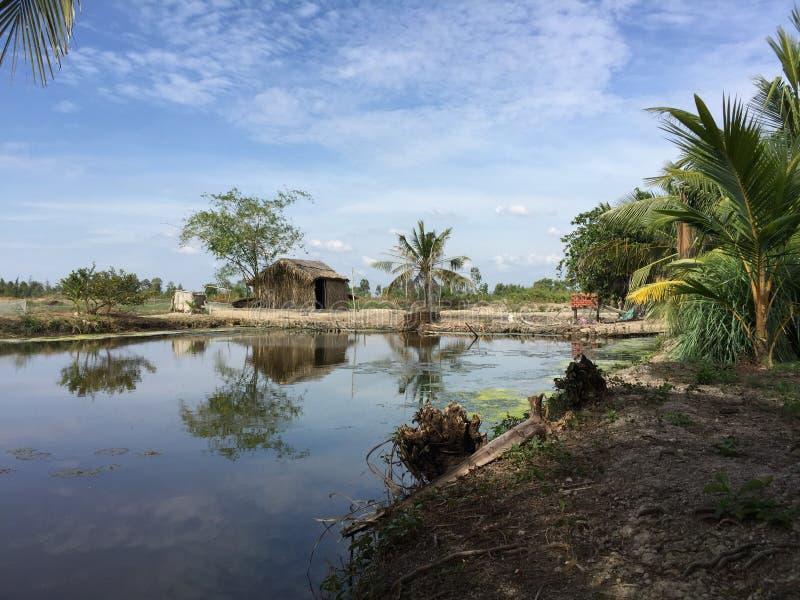 Aquaculture systemy, rozległy tygrysi krewetkowy kultury gospodarstwo rolne fotografia royalty free