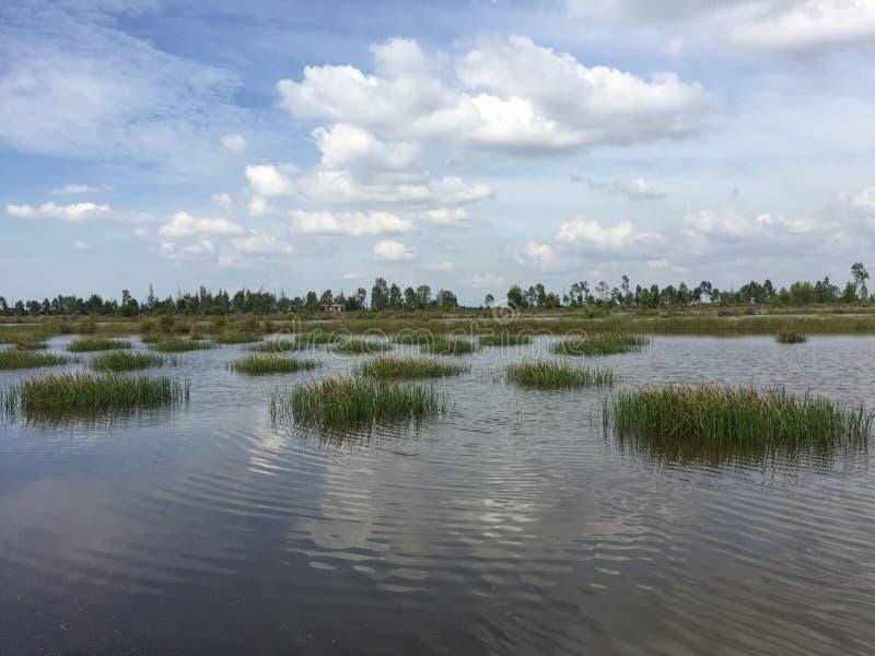 Aquaculture systemy, rozległy tygrysi krewetkowy kultury gospodarstwo rolne obrazy royalty free