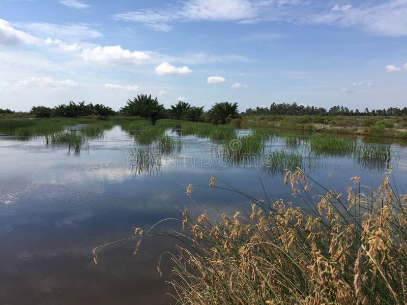 Aquaculture systemy, rozległy tygrysi krewetkowy kultury gospodarstwo rolne obraz royalty free