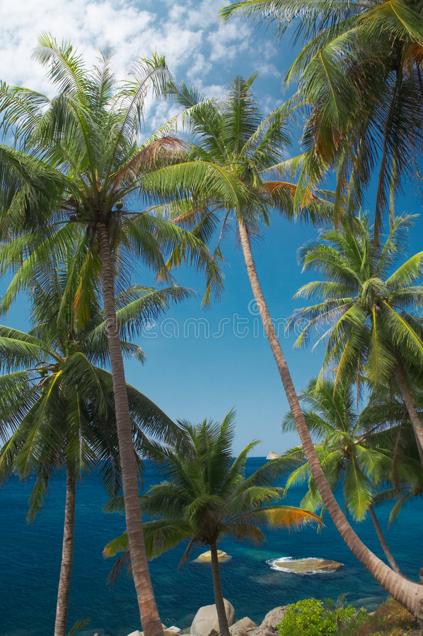 Aquamarijn en palmen royalty-vrije stock fotografie