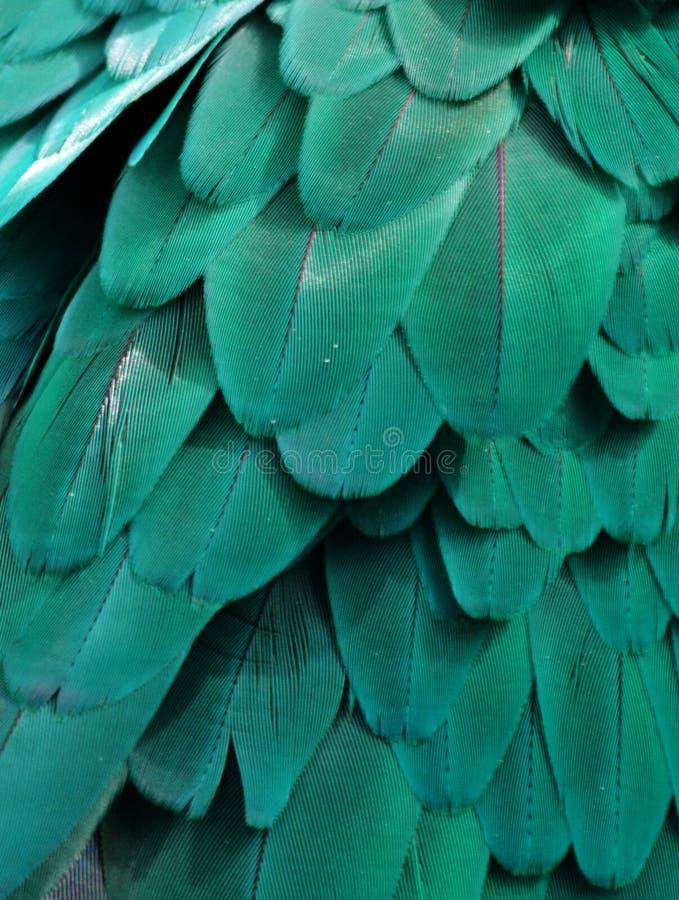 Aquamarine Macaw Feathers. Macro photo of blue/turquoise macaw feathers stock image