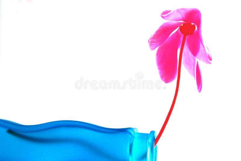Aquamarine and pink team stock photography