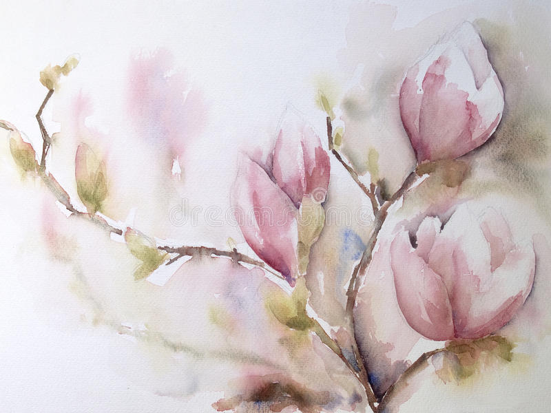 Aquarel or watercolor of Magnolia-flowers stock illustration