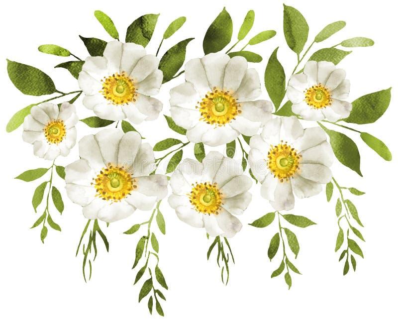 A aquarela branca floresce a decoração do ramalhete ilustração royalty free