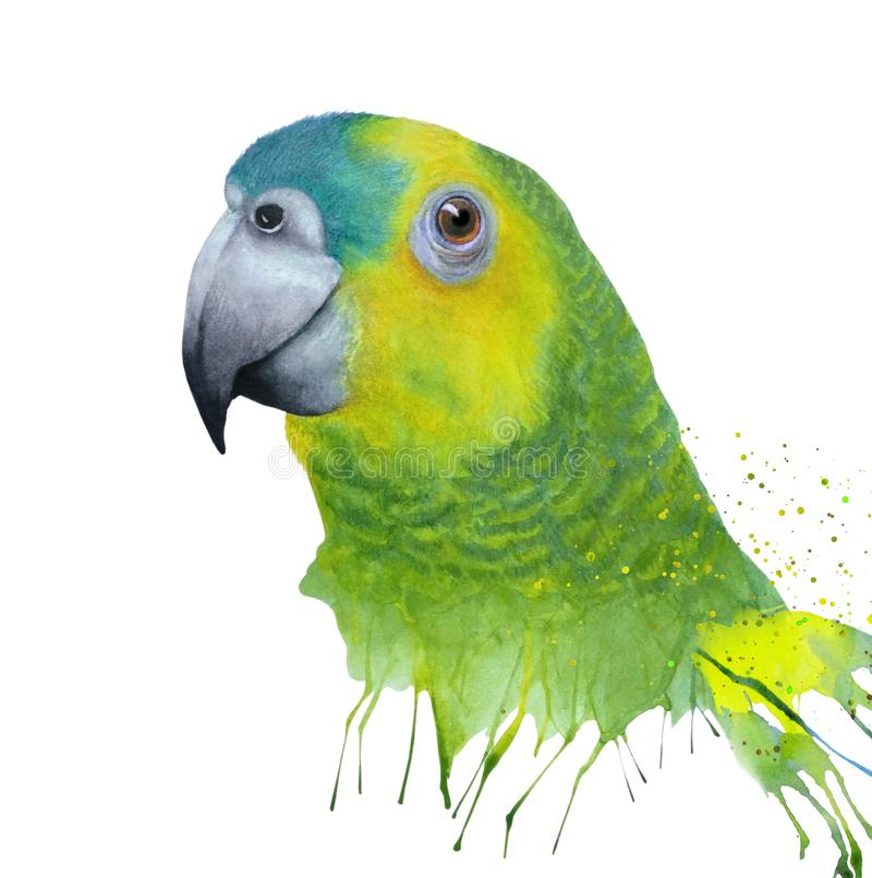 Aquarela com o papagaio verde de amazon ilustração stock
