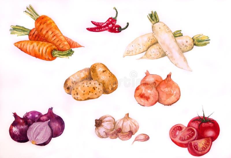 Aquarela da ilustração de Vegetabl Backgronds fotografia de stock
