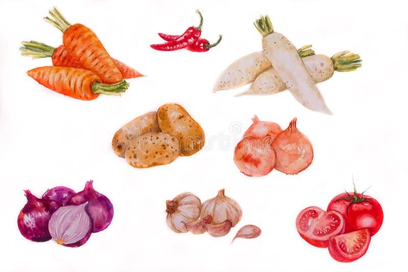 Aquarela da ilustração de Vegetabl Backgronds foto de stock
