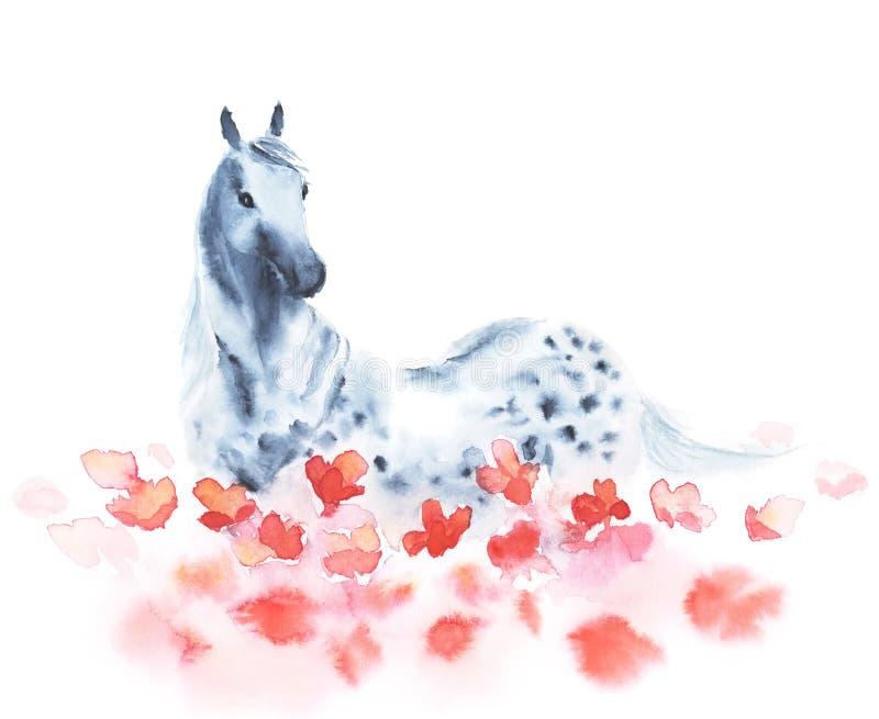 A aquarela dapple o cavalo cinzento no campo de flores vermelhas das papoilas ilustração do vetor