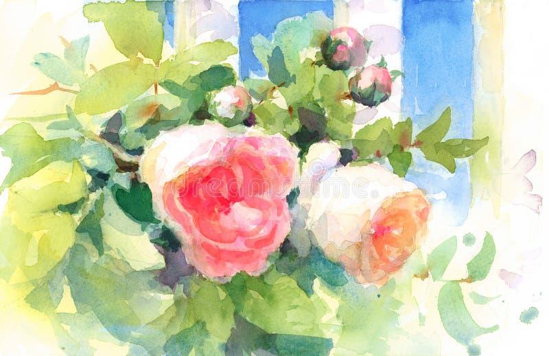 A aquarela das rosas do jardim floresce a ilustração pintado à mão ilustração royalty free