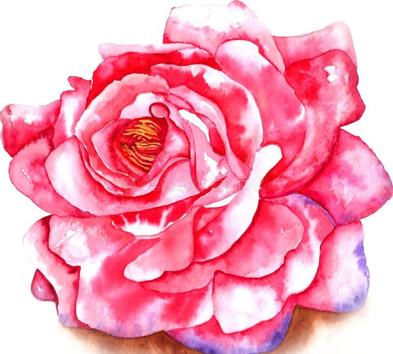 Aquarela de Rosa ilustração stock