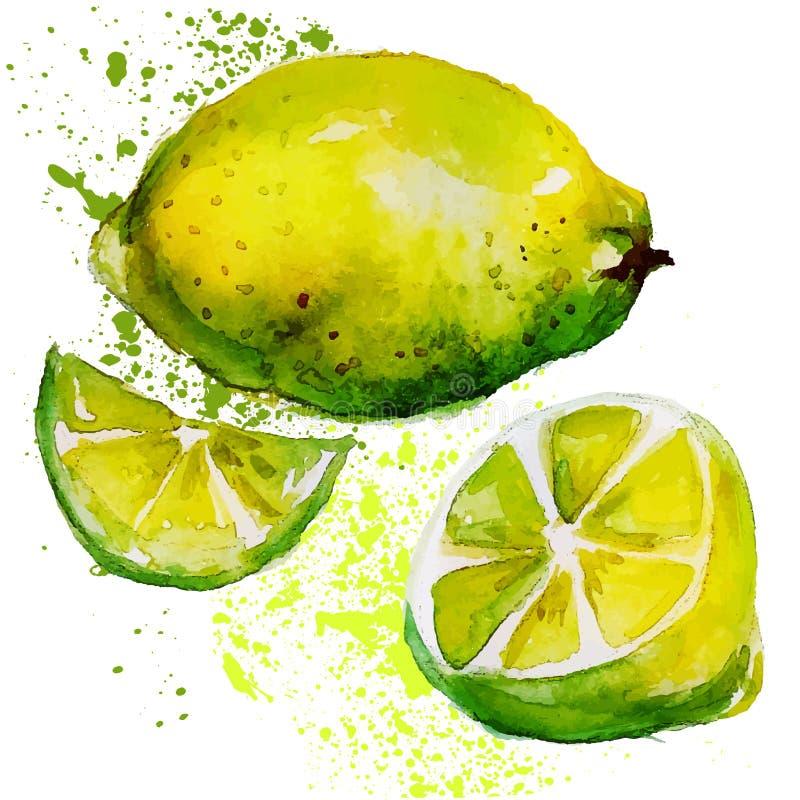 Aquarela do limão ilustração stock