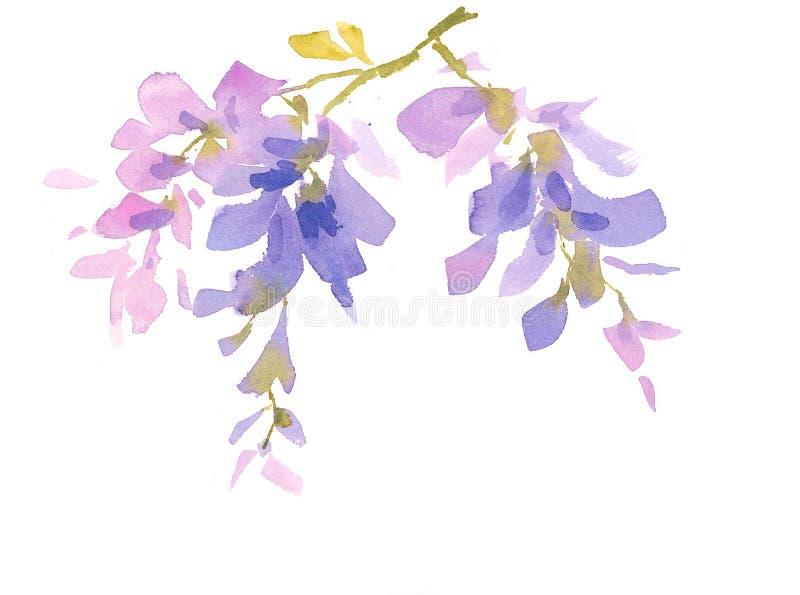 A aquarela do ramo da glicínia floresce a ilustração pintado à mão ilustração royalty free