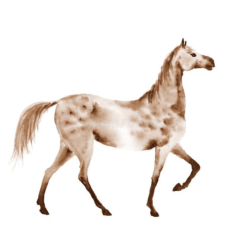 A aquarela do Sepia dapple o cavalo cinzento ilustração stock