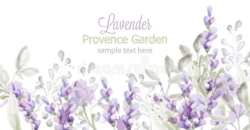 Aquarela do vetor do cartão da alfazema Provence floresce fundos da bandeira ilustração do vetor