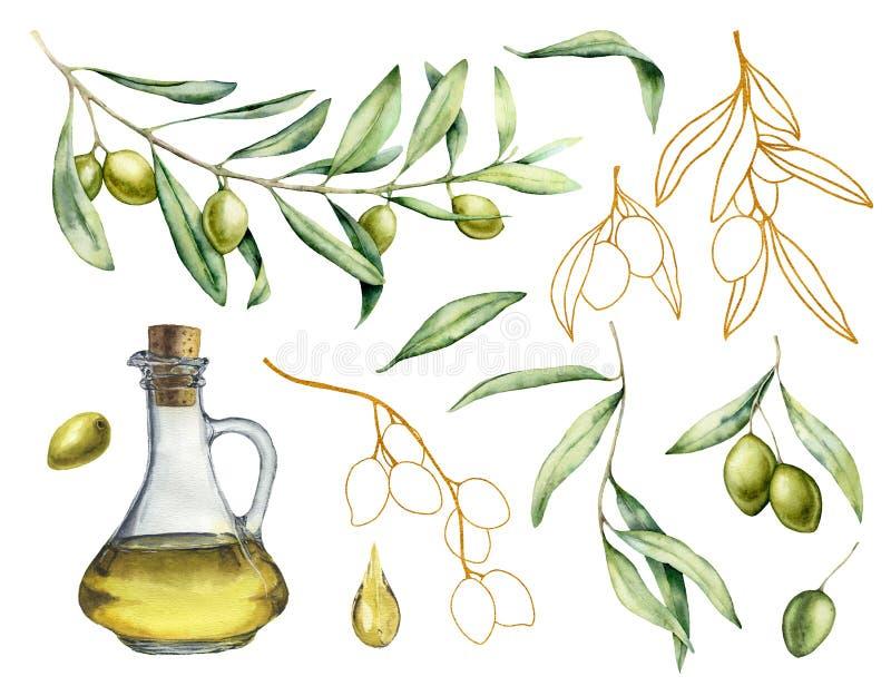 Aquarela e esboço dourado ajustados com azeitona, ramo e garrafa com óleo Ilustração pintado à mão com bagas e ilustração royalty free