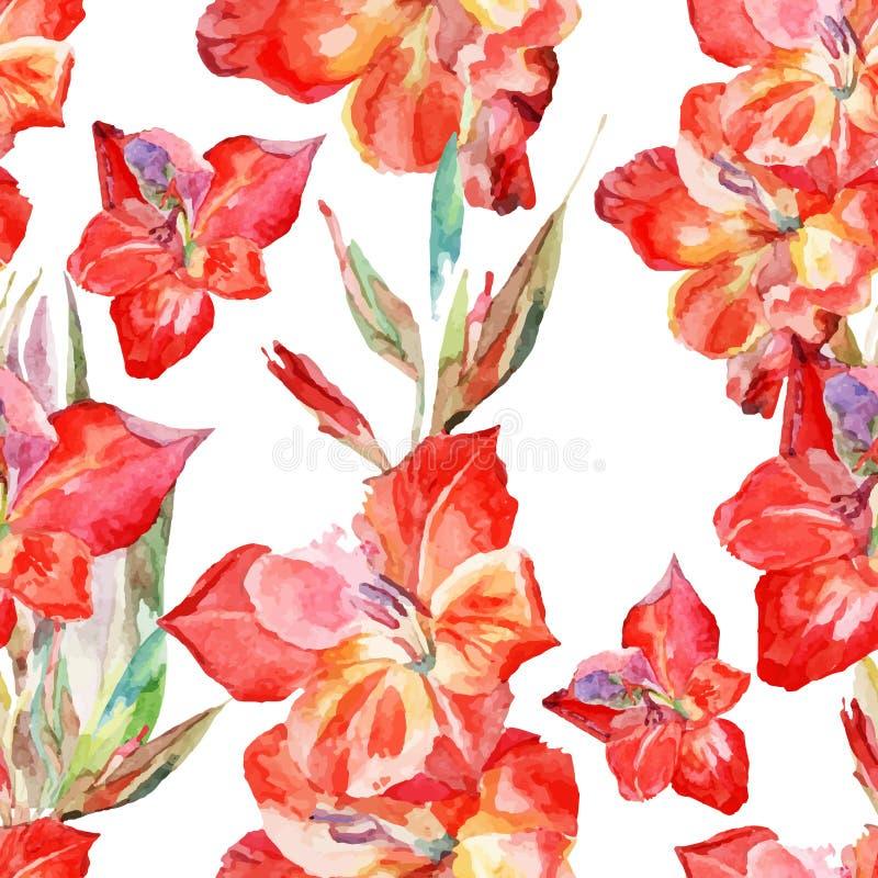 A aquarela floresce o glagiolus em um fundo branco ilustração stock
