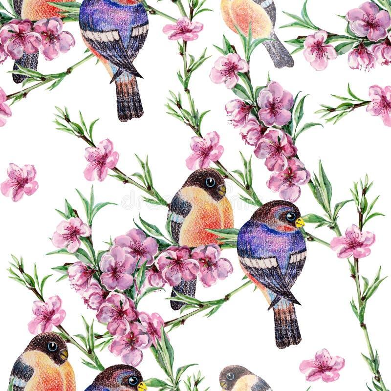 A aquarela floresce sakura com dom-fafe do pássaro Teste padrão sem emenda floral em um fundo branco fotos de stock