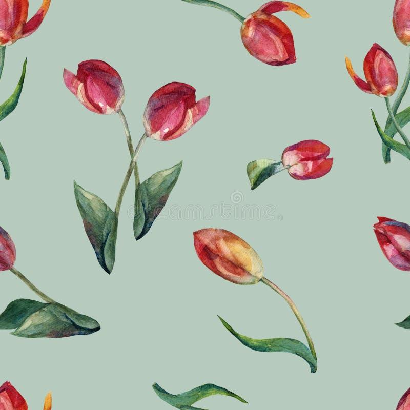 A aquarela floresce a tulipa vermelha Teste padrão sem emenda no fundo verde ilustração do vetor