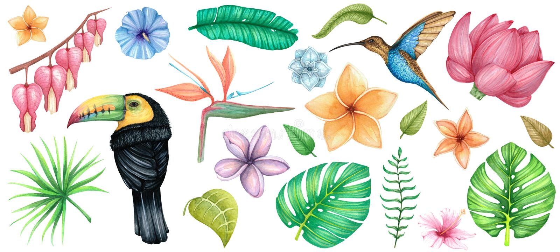 Aquarela grande ajustada com flores, os pássaros e as folhas tropicais ilustração stock
