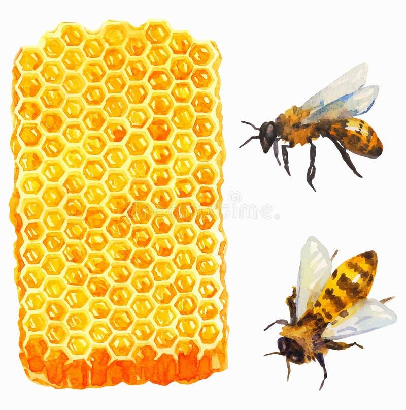 Aquarela Honeycomd e abelha ilustração do vetor