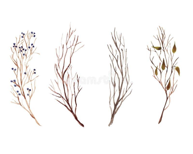 Aquarela pintado à mão ajustada com os ramos, as folhas bonitas e as bagas do outono isolados no fundo branco ilustração stock