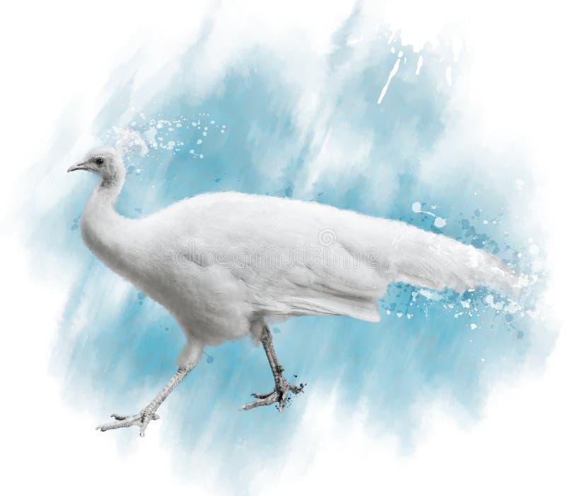 Aquarell-Bild des weißen Pfaus lizenzfreie abbildung