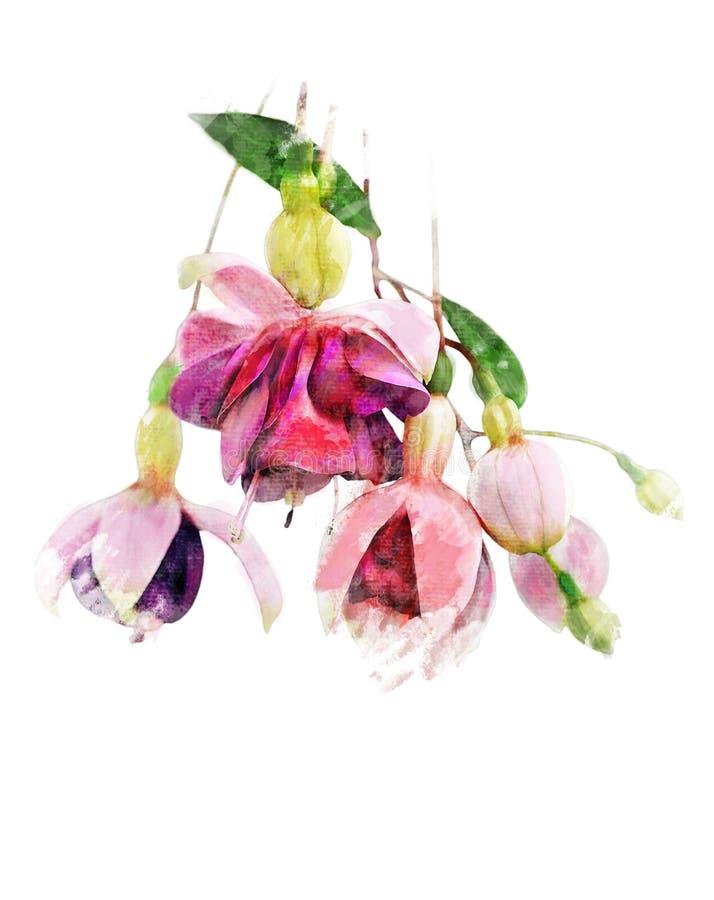 Aquarell-Bild von pinkfarbenen Blumen vektor abbildung