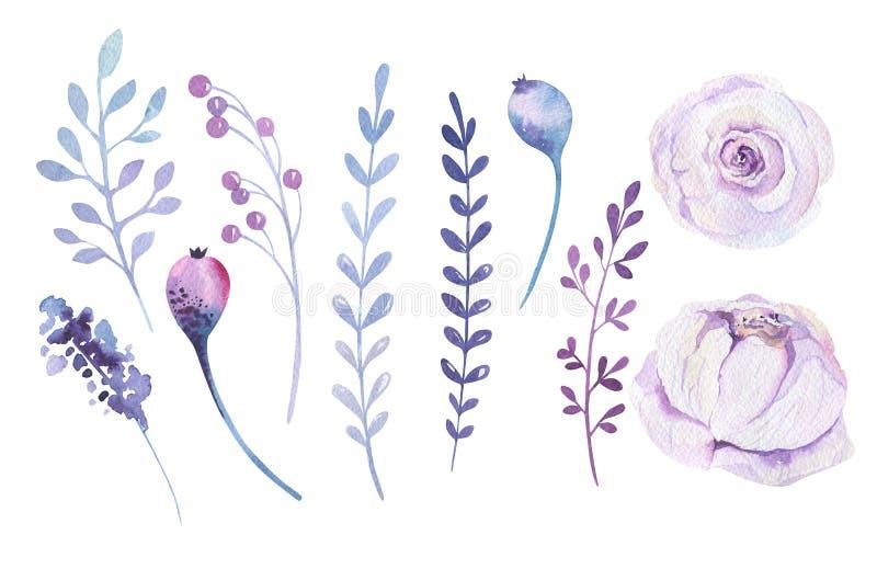 Aquarell boho Blumensatz Frühlings- oder Sommerdekoration Blumenb lizenzfreie abbildung