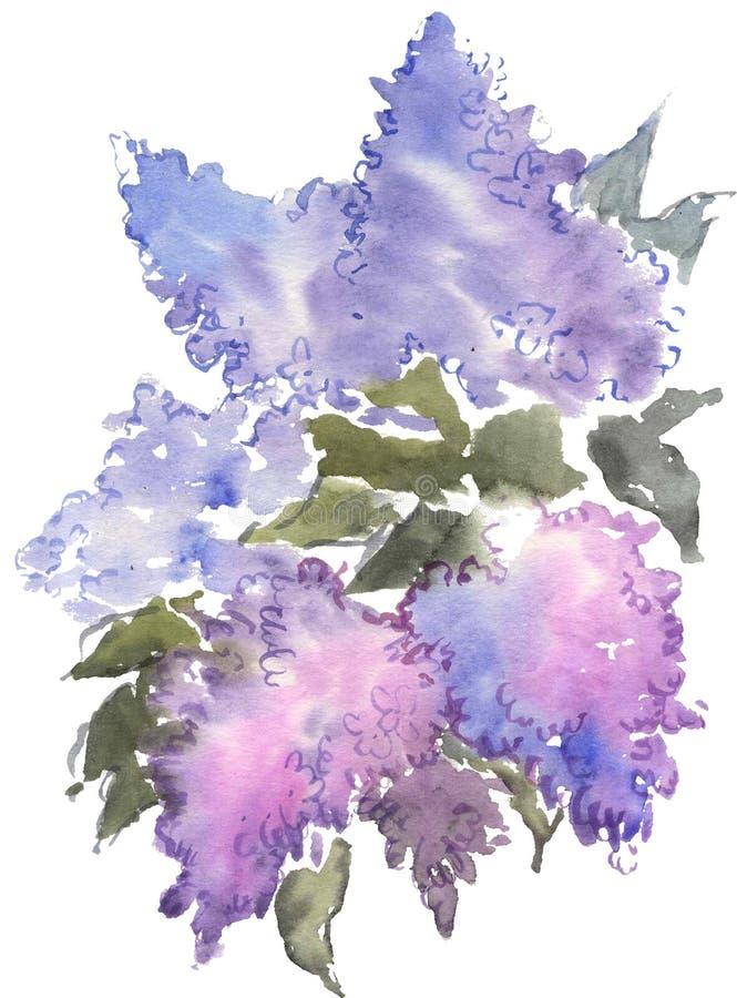 Aquarell, das blaue Flieder zeichnet stock abbildung