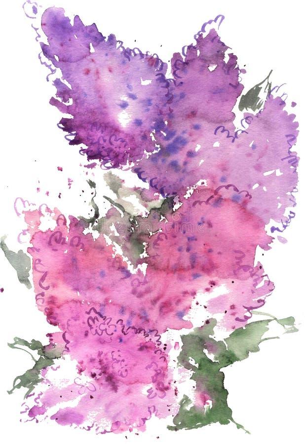 Aquarell, das blaue und purpurrote Flieder zeichnet lizenzfreie abbildung