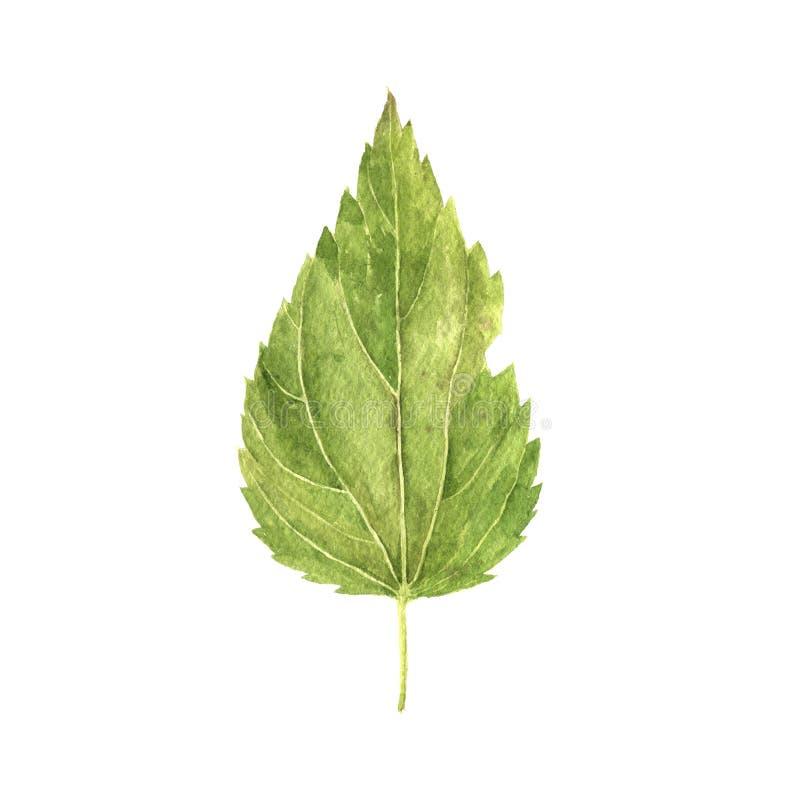 Aquarell, das grünes Blatt zeichnet stock abbildung