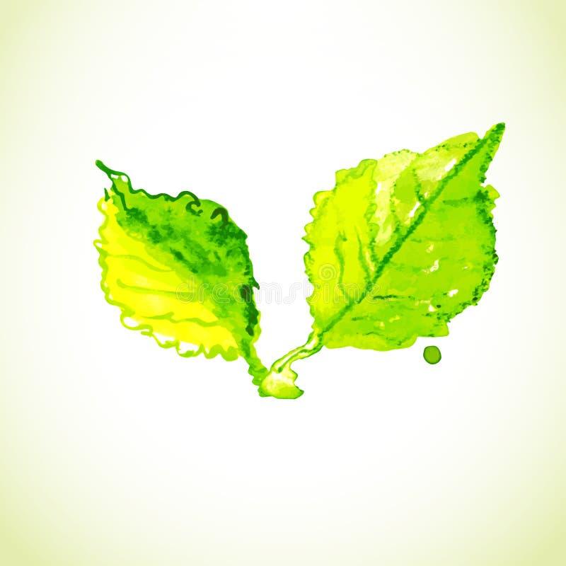 Aquarell, das zwei grüne Blätter zeichnet vektor abbildung