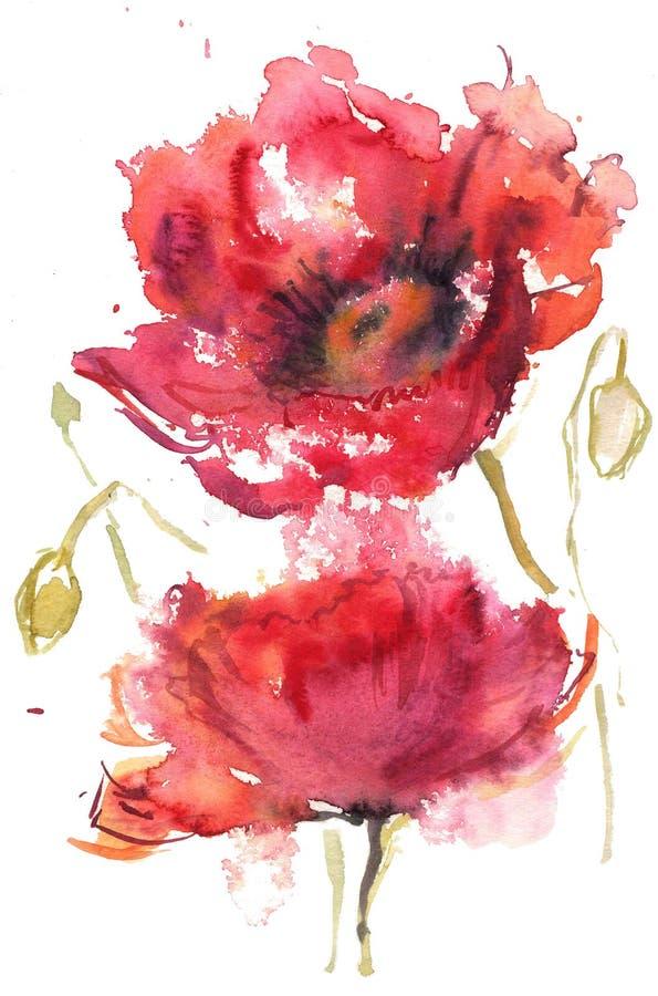 Aquarell, das zwei rote Mohnblumen zeichnet vektor abbildung