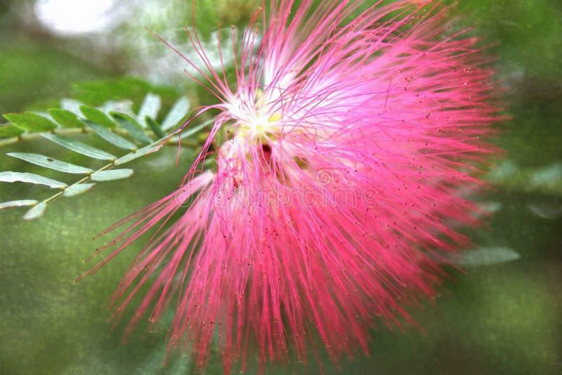 Download Aquarell der roten Blume stockbild. Bild von schönheit - 96927105