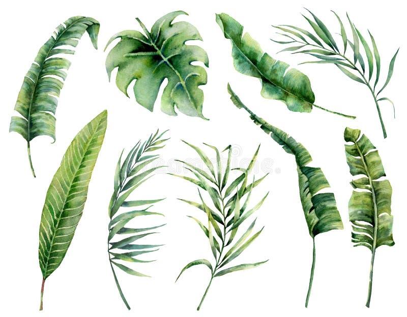Aquarell eingestellt mit tropischen Palmblättern Handgemalte Naturillustration mit Kokosnuss, Banane, monstera Blätter stock abbildung