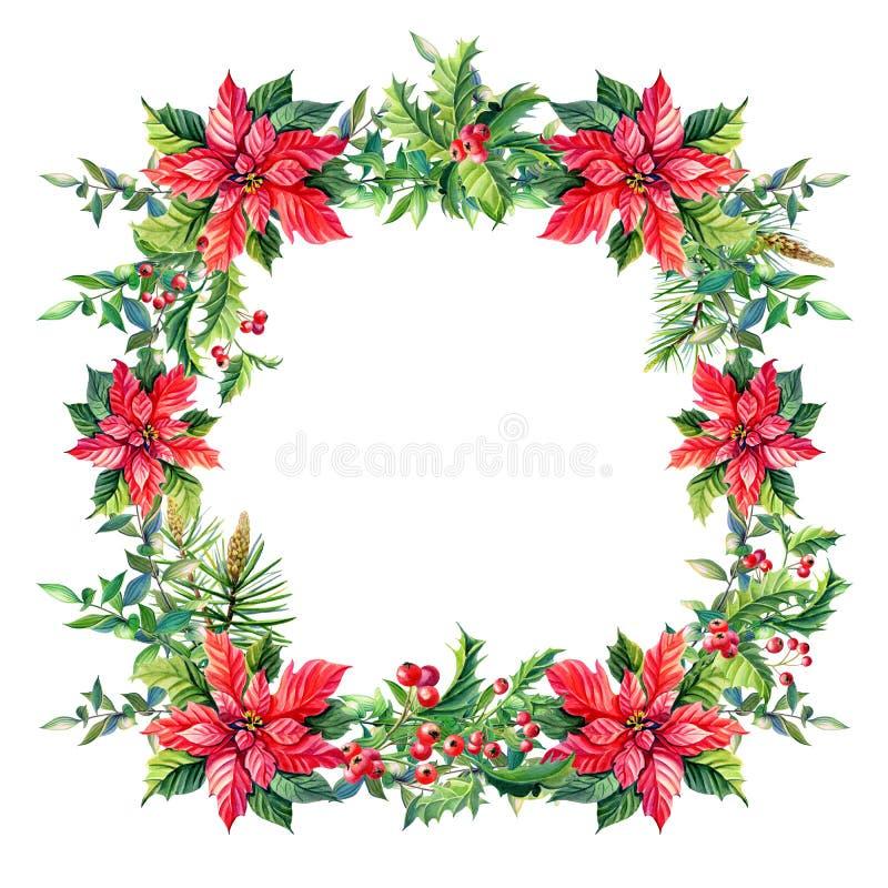 Aquarell-frohe Weihnacht-Feld mit roten Poinsettiablumen, Stechpalme, Blätter, Beeren, Kiefer, Fichte, grüne Zweige auf Weiß vektor abbildung