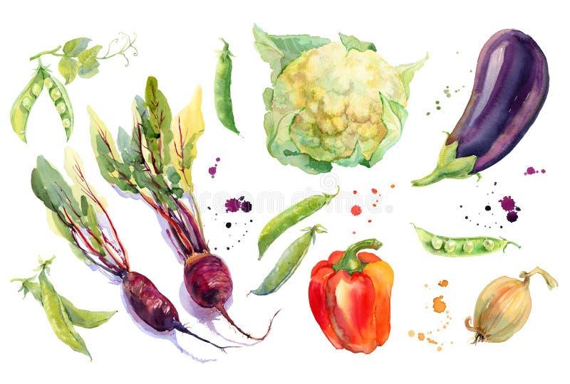 Aquarell-Gemüse eingestellt lizenzfreie abbildung