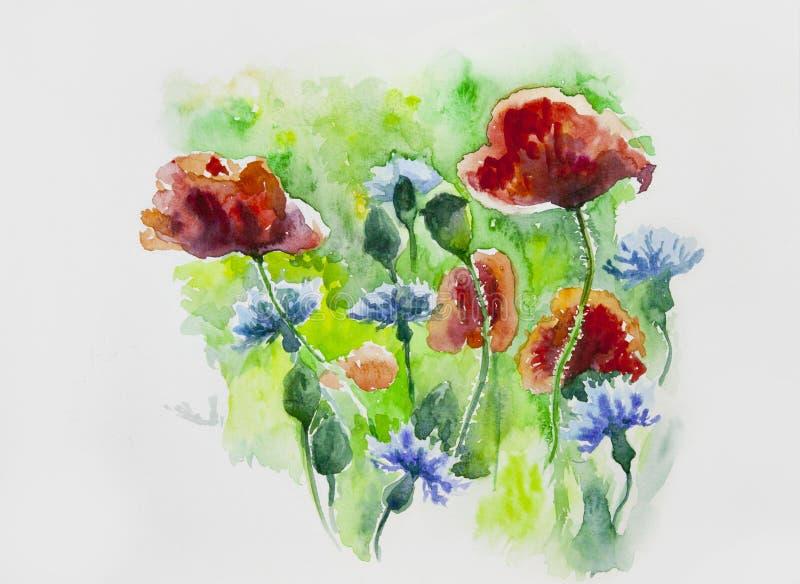 Aquarell gemalte Blumen, Mohnblumen und Kornblumen lizenzfreie stockfotos