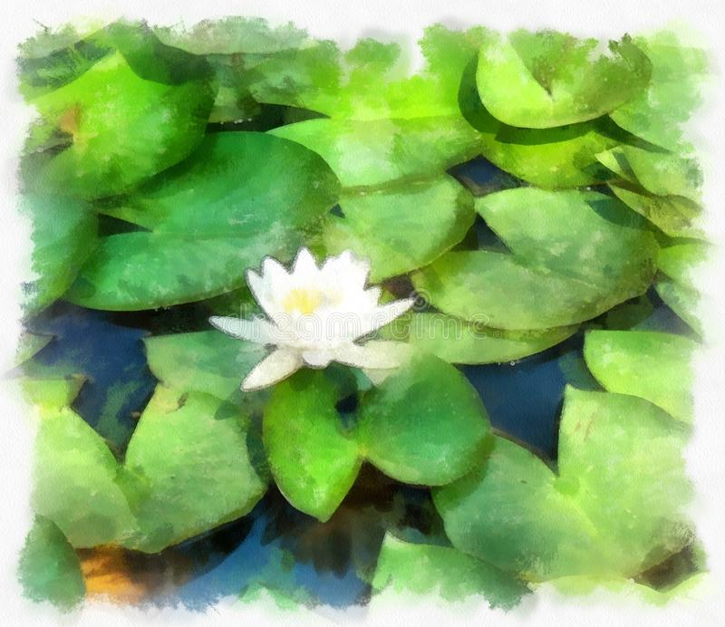 Aquarell image of lily. Abstract image aquarell image of water lily stock illustration