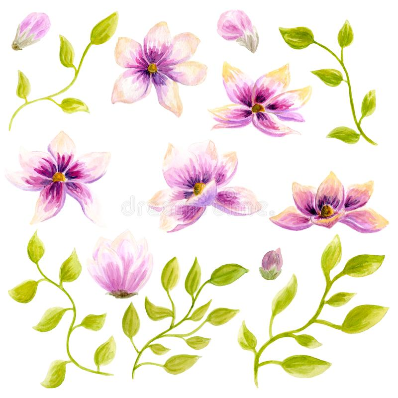 Aquarell-Malerei-Magnolienblütenblumentapeten-Dekorationskunst Hand gezeichnete lokalisierte Nahaufnahmebaumblumenillustration De stockfotos