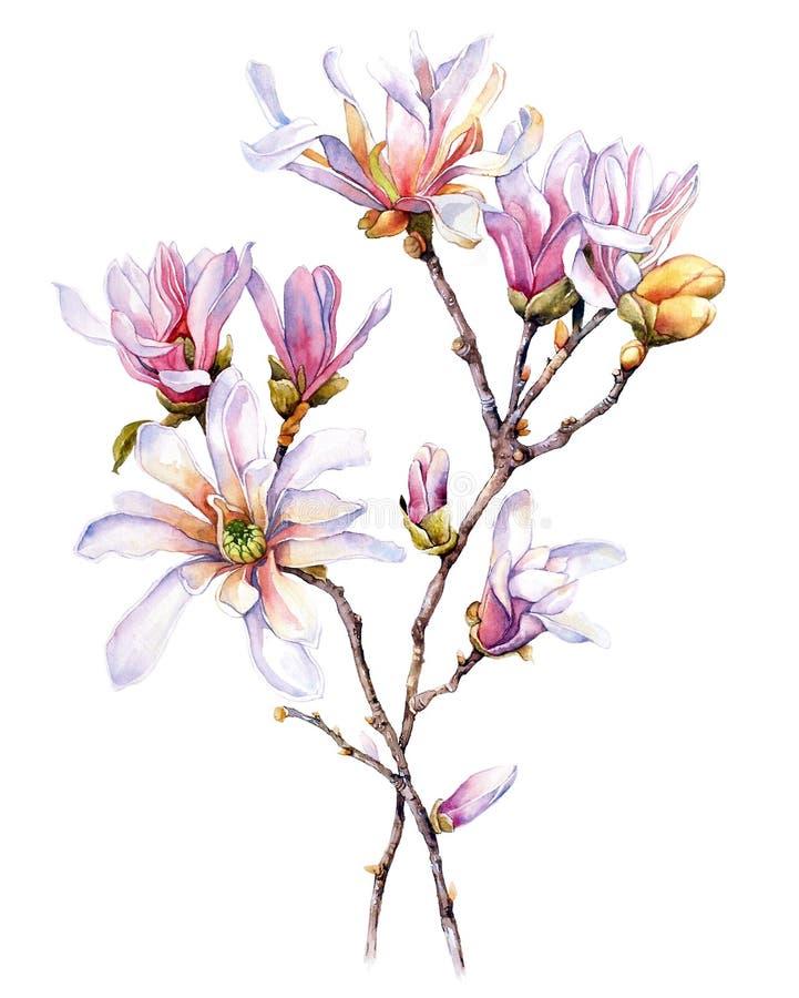 Aquarell mit Magnolie lizenzfreies stockfoto