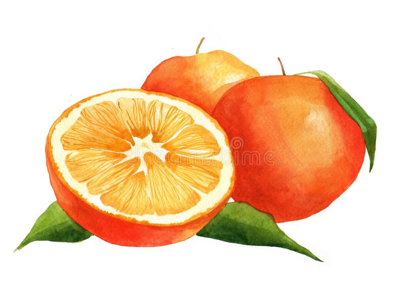 Aquarell orange und geschnittene orange Frucht lokalisiert stockfotografie