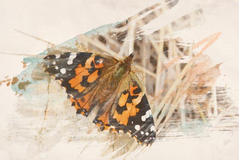Aquarell-Schmetterlings-Hintergrund lizenzfreie abbildung