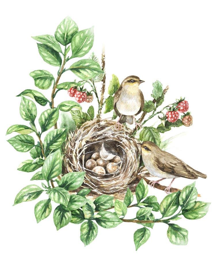 Aquarell-Singvögel nähern sich Nest lizenzfreie abbildung