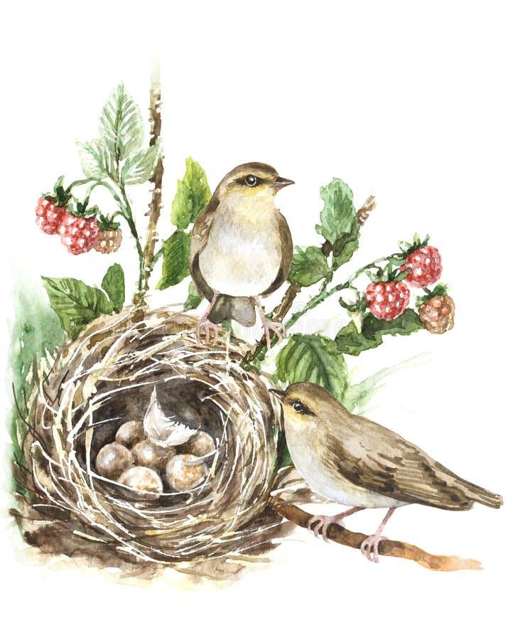 Aquarell-Singvögel und Nest lizenzfreie abbildung
