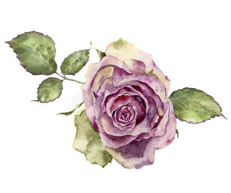 Aquarell stieg mit Blättern Handgemalte Weinlese Blumen-illustr lizenzfreie abbildung
