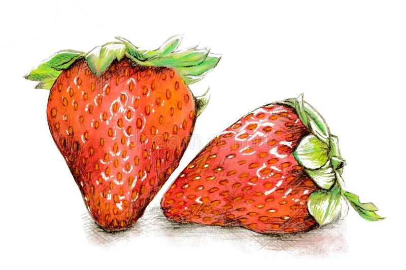 Aquarell- und Bleistiftillustration von Erdbeeren vektor abbildung